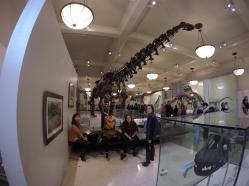 the dinosaur room.